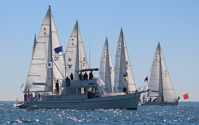 Harbor cup-1093