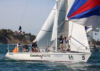 Harbor cup-2625