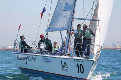Harbor cup-1256