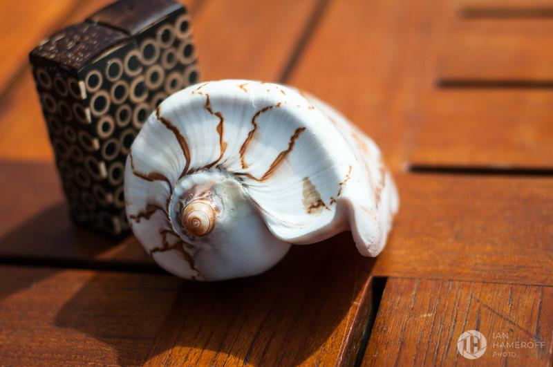 Lava Lava Shell