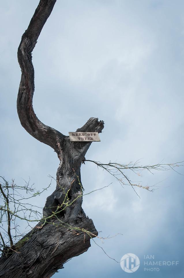 Keep Off Trees