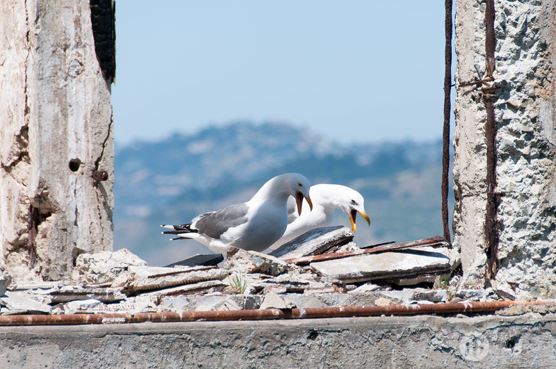 Birds of Alcatraz