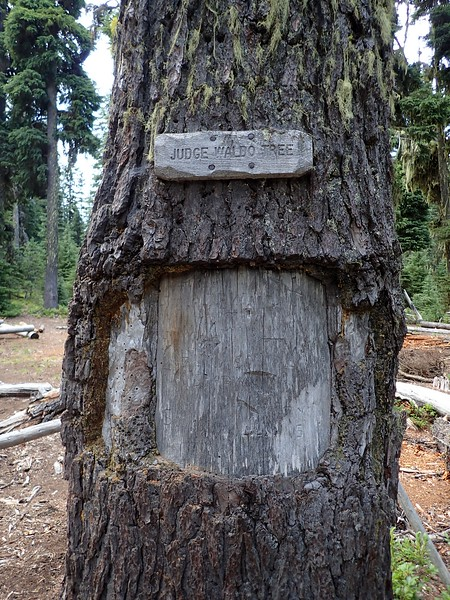 Judge Waldo Tree Sky Lakes Wilderness Oregon