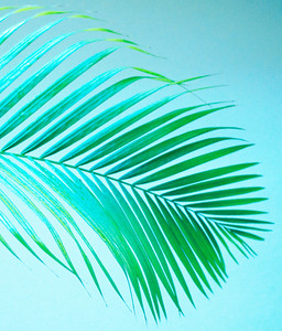 2015-09-17 - Studies In Palm Fronds