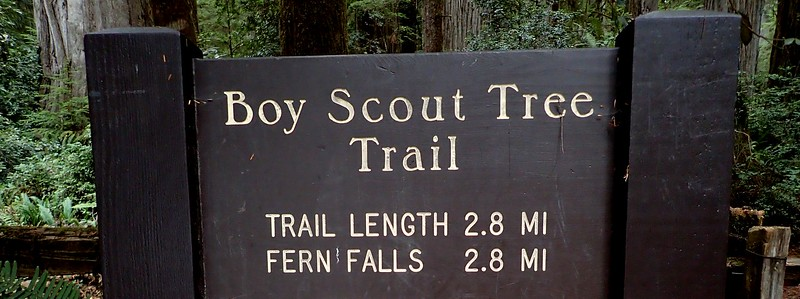 Boy Scout Tree Jedediah Smith Redwoods State Park California