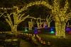 Christmas Lights - Botanica