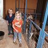 2015-16 livestock show 038