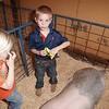 2015-16 livestock show 042