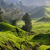 3rd - Bill Cubitt - FCC - Malaysia Tea Fields