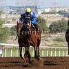 Horse Racing, Jebel Ali, Dubai, United Arab Emirates - 13th November 2015