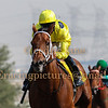 Horse Racing 22 Jan 2016,Jebel Ali, Dubai, United Arab Emirates
