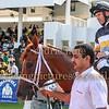 Horse Racing, Jebel Ali, Dubai, United Arab Emirates - 27th November 2015