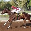 Horse Racing from Jebel Ali, Dubai, UAE 30th November 2015