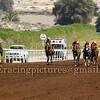 Horse Racing 4 March Feb 2016,Jebel Ali, Dubai, United Arab Emirates