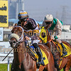 Horse Racing 8 Jan 2016,Jebel Ali, Dubai, United Arab Emirates