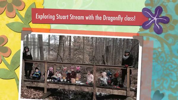 Stream Show (Dragonfly Class)