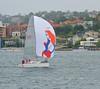 sailing sydney