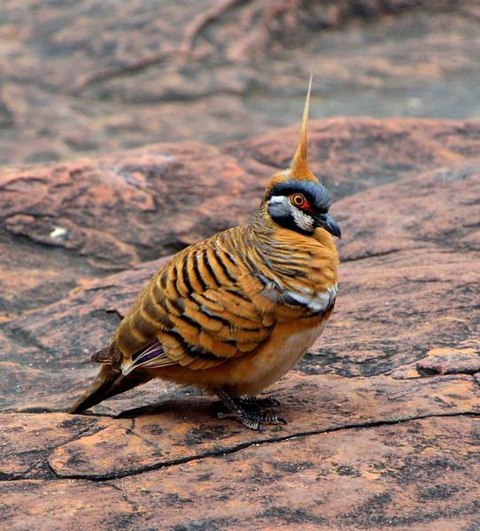 Bird at KC