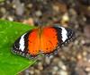 moth 2