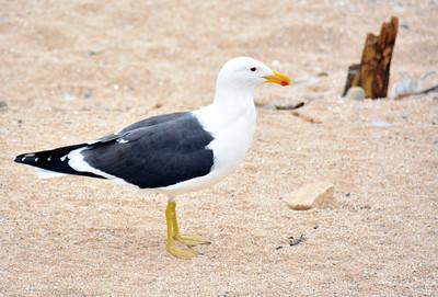 2015 vina poser seagull
