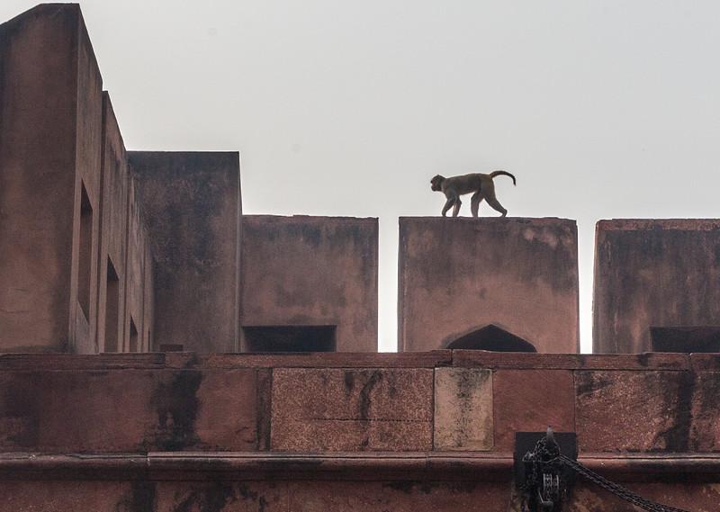 Agra-1127