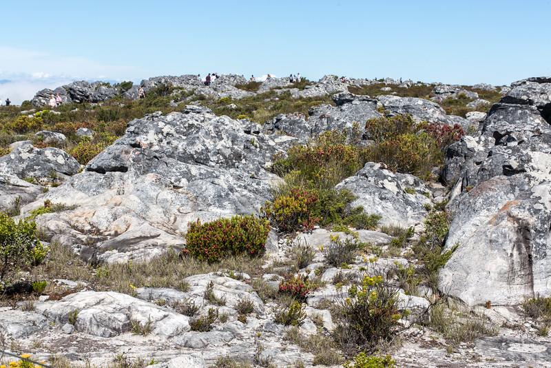 Cape Town-4519