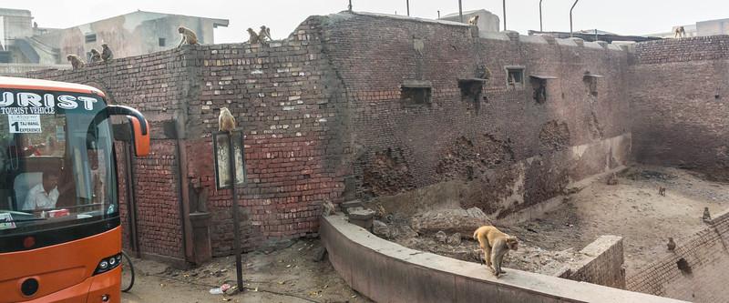 Agra-1166