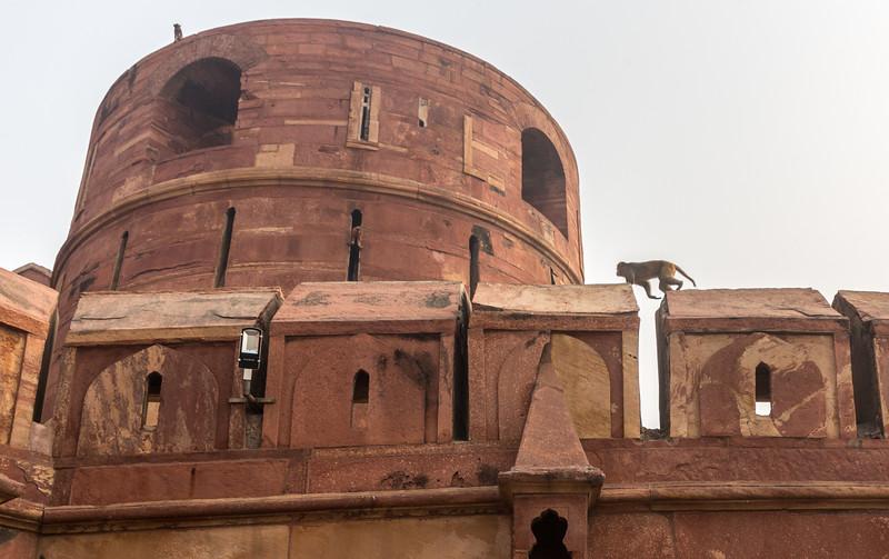 Agra-1136