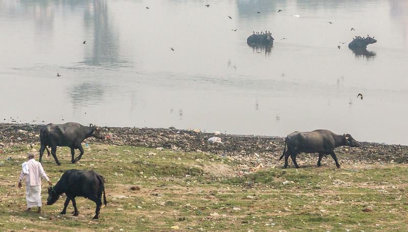 Agra-1174