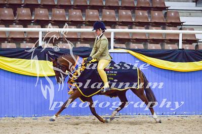 Class 6 Lrg Show Hunter Pony 13-14hh