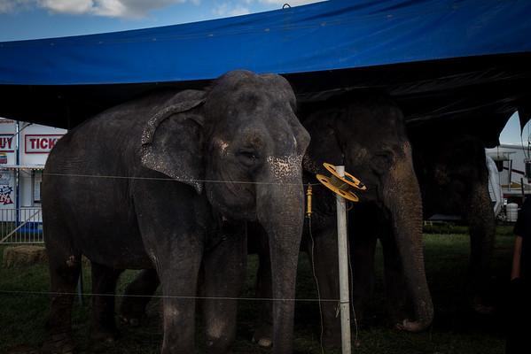 090415_Washing the Elephants