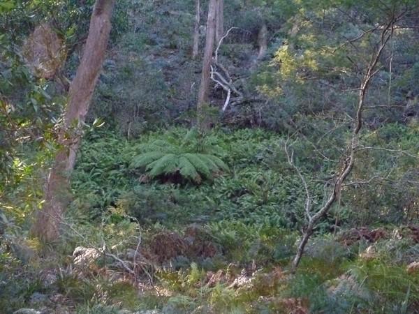 Ferny gully near control 63