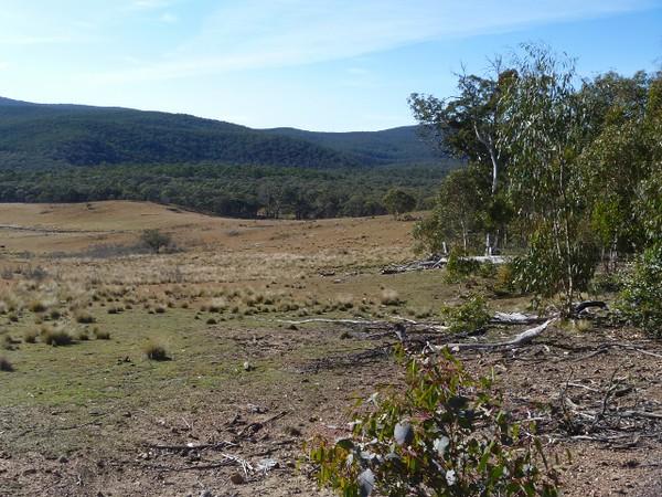 Open grassy plains