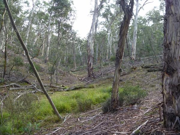 Forest gullies