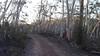 Cowangerong Fire Trail between 32 and 75