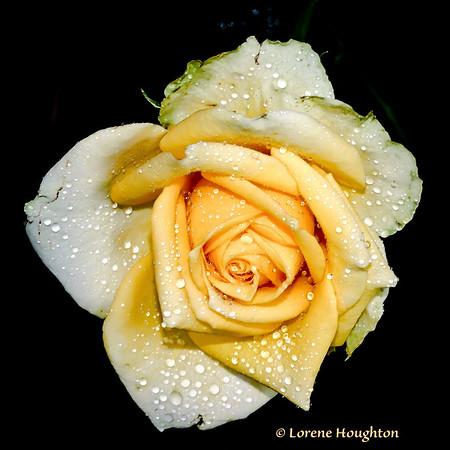Lorene Houghton