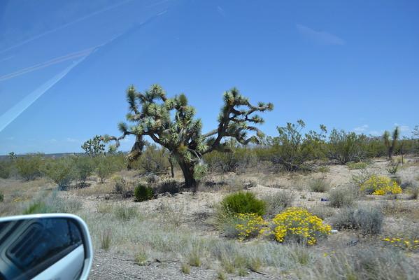 2015  Guys Arizona Trip to Phoenix and Colorado River