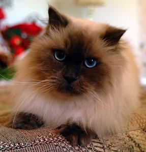 My Beloved Kitty