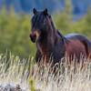 Fabio the stallion