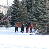 7 stallion band....being stallions