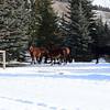 7 stallion band