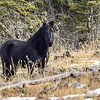 """Freedom"" is a stallion  that was named on Help Alberta Wildies site:  https://www.facebook.com/helpalbertawildies?fref=ts"