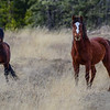 stallion on the left, mare on the right