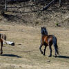 2 mares & yearling