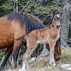 Foal #3 -  Forestry Road