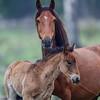 mom & colt
