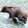 UntitledDog Bear II