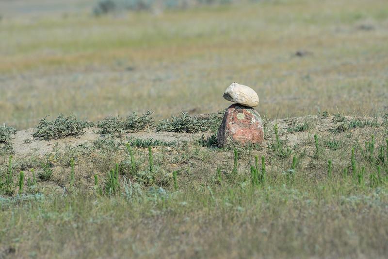 burrow with no owls