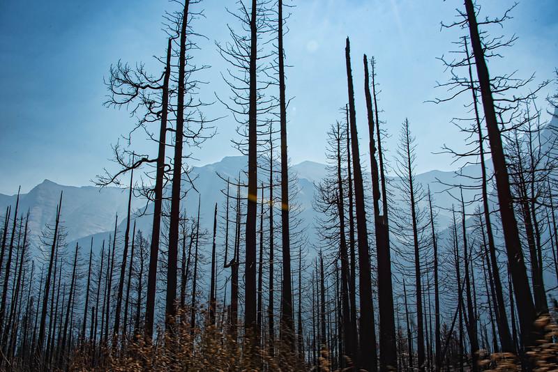 Recent forest fire