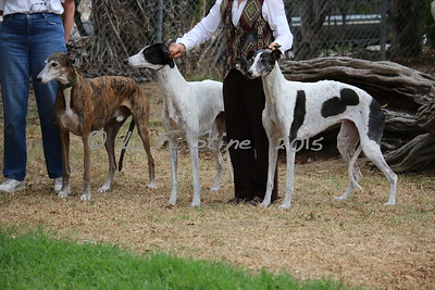 Brego, Breeze and Whisper from Aroi and Aragon kennels.